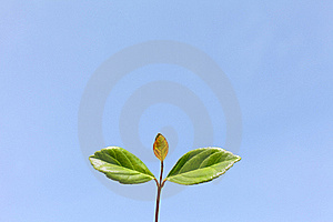 Green Leaves And Blue Sky Stock Images - Image: 19559794