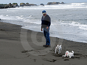 Dog Play Royalty Free Stock Photography - Image: 19567277