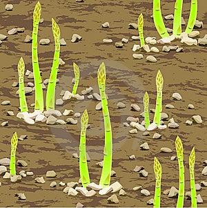 Asparagus Spear Emerging Through The Soil Stock Photos - Image: 19567483