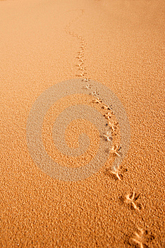 Sandy Background Royalty Free Stock Image - Image: 19570316