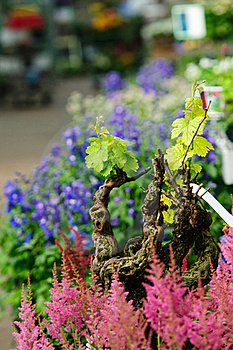 Vine In Garden Shop Stock Photography - Image: 19572092