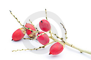 Red Sealing Wax Palm Fruits Isolate Stock Images - Image: 19576354
