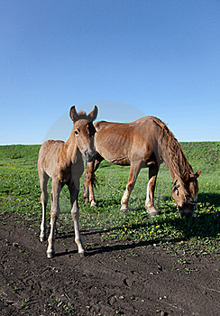 Mare And Her Foal Stock Image - Image: 19587301