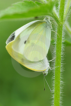 Butterfly Royalty Free Stock Photography - Image: 19590187
