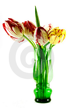 Tulips Stock Photos - Image: 19595323