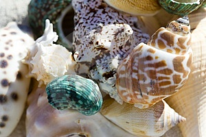 Shell Ending On The Beach Royalty Free Stock Photography - Image: 1969987