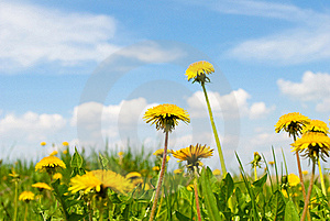 Summer Landscape, With Colour And Sky. Royalty Free Stock Photography - Image: 19603647