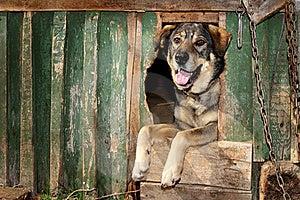 The Benevolent Dog Royalty Free Stock Image - Image: 19605026