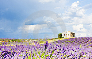 Lavender Field, Provence Stock Photography - Image: 19607802