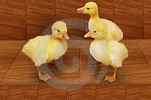 Three  Duckling Stock Images - Image: 19608304