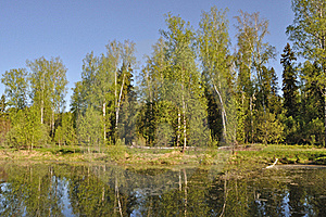 Small Forest Lake Royalty Free Stock Photo - Image: 19612005
