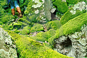 Mossy Large Rocks In The Forest Royalty Free Stock Photos - Image: 19617408