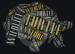 Textcloud Of Turtle Stock Photos - Image: 19621823