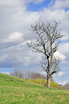 Unique Tree Stock Image - Image: 19633181