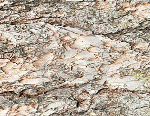 Texture Royalty Free Stock Image - Image: 19642646