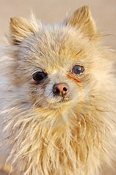 Cute Dog Stock Photography - Image: 19649902