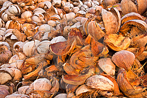 Coconuts Shells Stock Photography - Image: 19653752