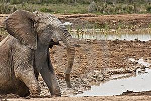 Mud Bath Stock Image - Image: 19654141