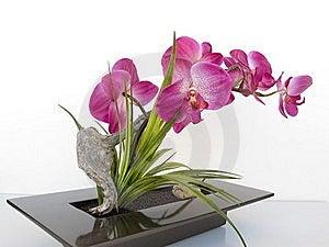 Plant Stock Photos - Image: 19654353