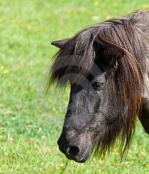 Portrait Of A Brown Horse In A Meadow Royalty Free Stock Photo - Image: 19658905