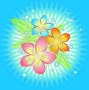 Frangipani Flower Stock Image - Image: 19663381