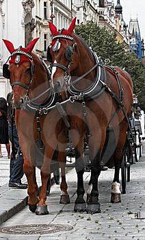 Horses In Prague Royalty Free Stock Photo - Image: 19666545