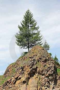 Fir On A Slope Royalty Free Stock Images - Image: 19667589