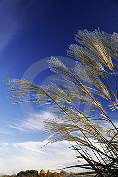 Grasses Against The Sky Stock Images - Image: 19668814