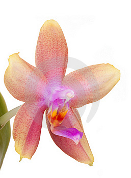Orchid Flower Stock Image - Image: 19670471
