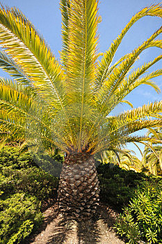 Palm Tree Base And Branches With Sky Stock Photography - Image: 19671402