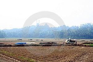 Camion Caricato Fieno Nel Mezzo Del Campo Di Risaia Fotografie Stock Libere da Diritti - Immagine: 19676018