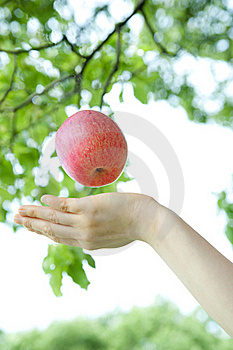 Catch An Apple Stock Images - Image: 19680804