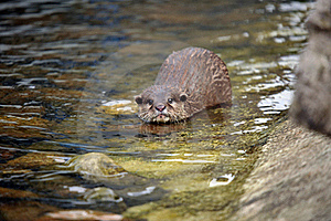 Beautiful Otters Stock Image - Image: 19682981
