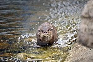 Beautiful Otter Stock Photos - Image: 19682993