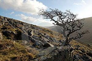 Dartmoor Tree England Stock Photography - Image: 19686802