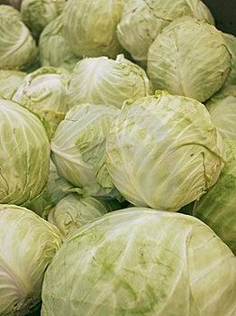 Fresh Cabbages Stock Image - Image: 19692751