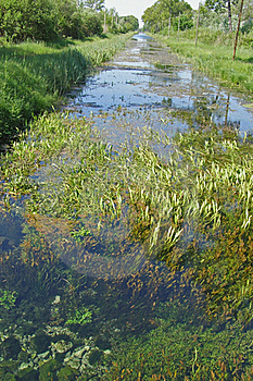 Underwater Meadow Stock Photography - Image: 19695692