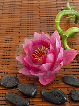 Spa Composition With Pink Water Lily Stock Images - Image: 19696094