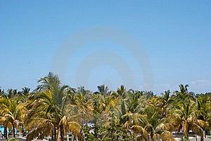 Palm Trees Background Stock Image - Image: 19700231
