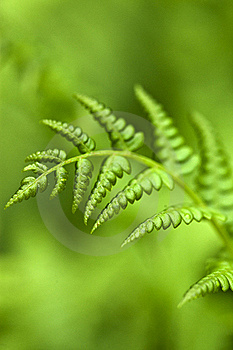 Green Fern Stock Photography - Image: 19702072