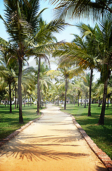 Palm Tree Trail Stock Image - Image: 19707501