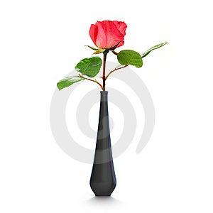 Pink Rose Stock Image - Image: 19708411