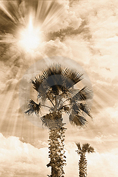 Palm In Autumn Royalty Free Stock Images - Image: 19708439