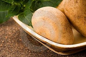 New Potato Stock Image - Image: 19711821