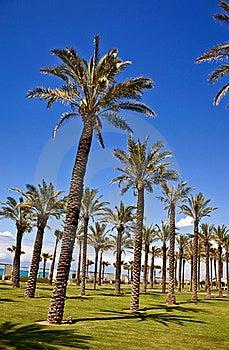 Palm Tree Row Stock Photo - Image: 19714820