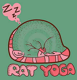 Rat Yoga Stock Photo - Image: 19716870