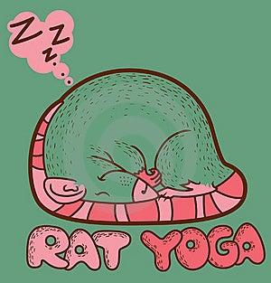 Rat Yoga Stock Photo - Image: 19716870
