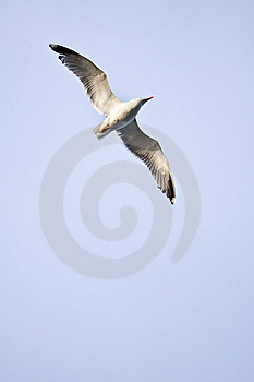 Sea Gull Stock Images - Image: 19720884