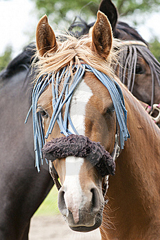 Decorated Horse Royalty Free Stock Photography - Image: 19724297