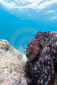 Octopus Stock Photo - Image: 19724520